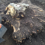 Removing Tree Stump and Roots