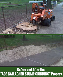 Before and After of Stump Grinding